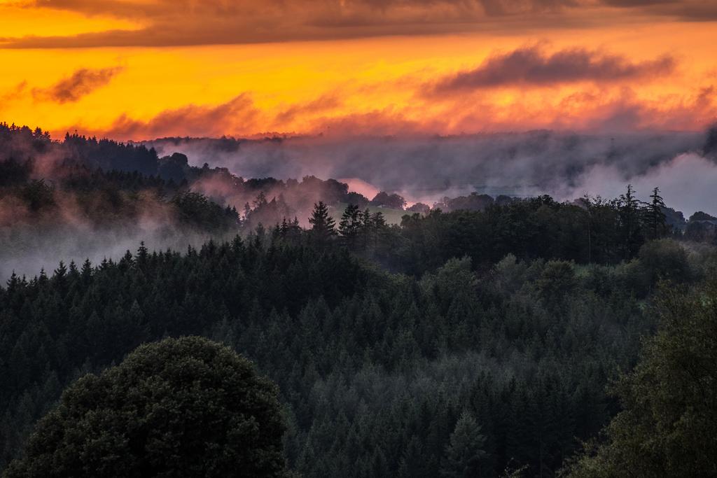 Foto: Flickr/Willy Verhulst